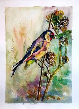 Bird  by Baruch Neria-Kandel