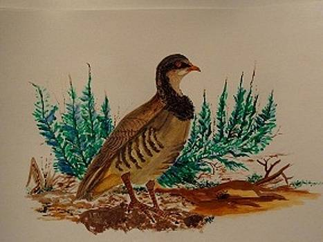 Nancy Fillip - Chukar