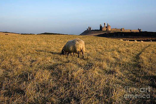 Dunstanburgh Castle - Sunrise by David Smith