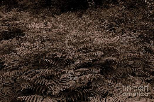 Ferns by Steve Patton