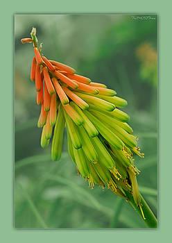 Flower by Tri Tran
