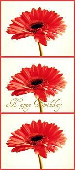 Happy Birthday by Cathie Tyler