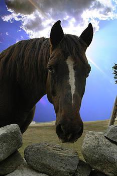 Horse headshot by Rafael Figueroa
