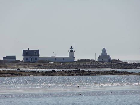 Nancy Fillip - Maine Coast