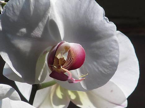 Alfred Ng - orchid macro
