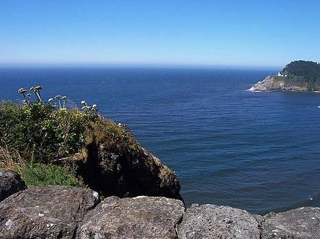 Oregon Coast by Christine Edwards