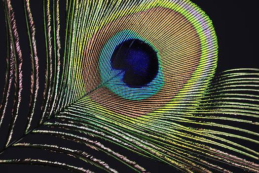 Peacock feather by Falko Follert