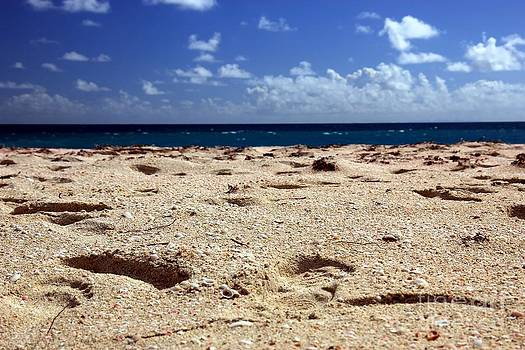 Sophie Vigneault - Pink Sand Beach