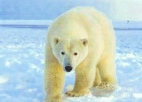 Polar Bear by Diane Kurtz