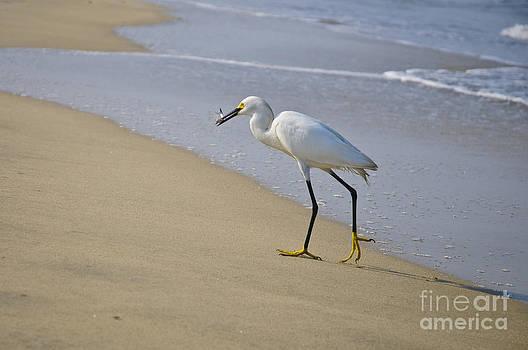Christine Kapler - Snowy Egret fishing on Puerto Vallarta beach.