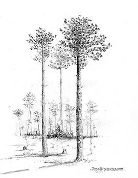 Jim Hubbard - Southern Longleaf Pine