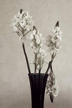 Southwind Lilies by Carol Vanselow