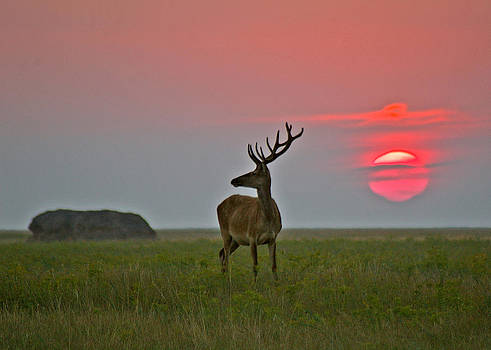 Sunset by Jane Bulatnikova