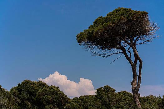 Trees by Daniel Kulinski
