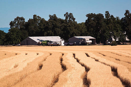 Chris Fullmer - Wheat Field Lines