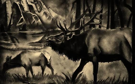 Wildlife by Scott Hawkman