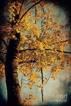 Angela Doelling AD DESIGN Photo and PhotoArt - Autumn