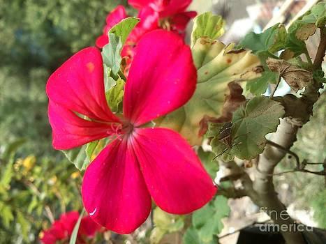 Flower by David Lrs