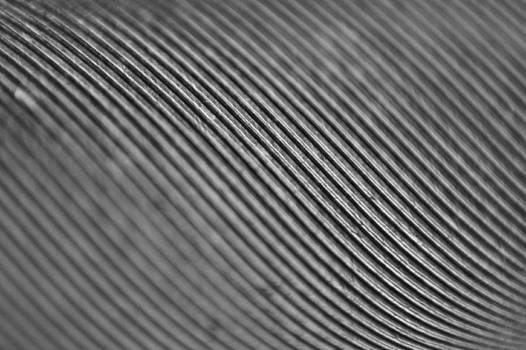 Lines by Daniel Kulinski