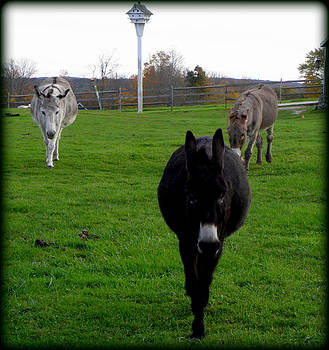 3 Little Donkeys  by Kim Galluzzo Wozniak