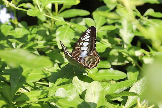 Rebecca Frank - Butterfly