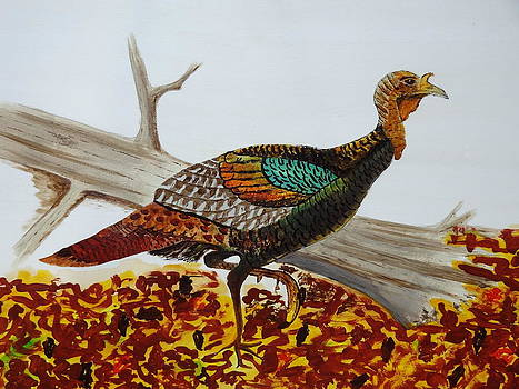 Nancy Fillip - Wild Turkey