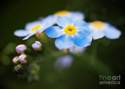 Flower by James Taylor