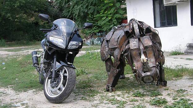 Rhinoceros  by Andrei Molnar