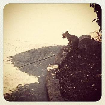 Instagram Photo by Robyn Montella