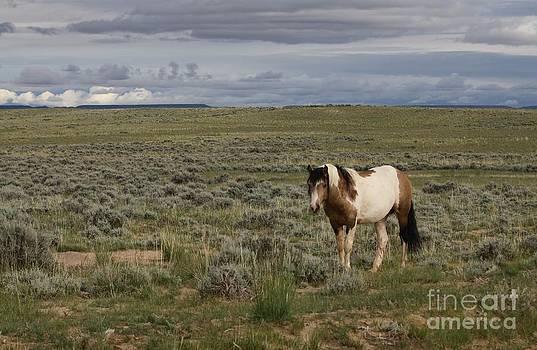 McCullough Peaks Stallion by Lori Bristow