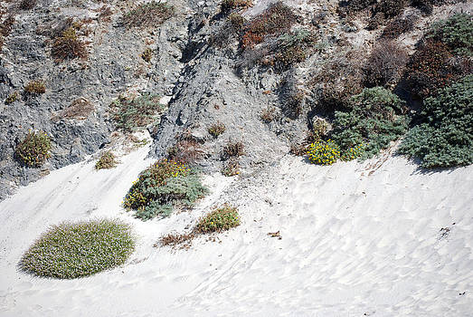 Harvey Barrison - Pfeiffer Beach