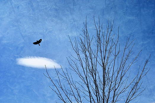 Emily Stauring - A Bird A Tree A Cloud