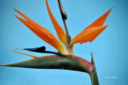 A bird by the pool by Maria Nesbit