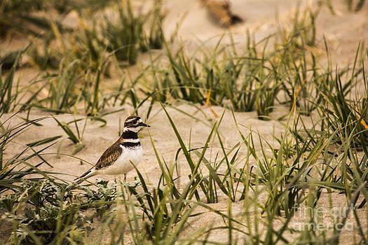 A Bird in the Beach by Karl Monsos
