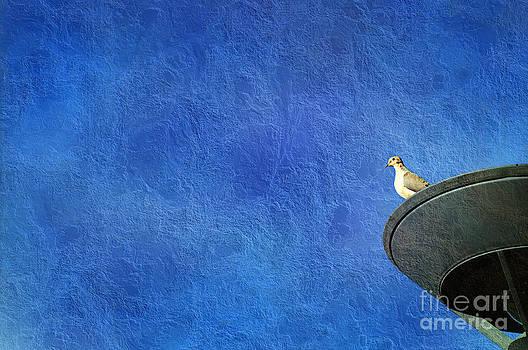 Andee Design - A Birds Eye View