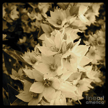 A bloom of sepia by Trish Hale