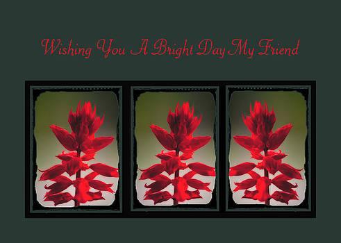 Darlene Bell - A Bright Day