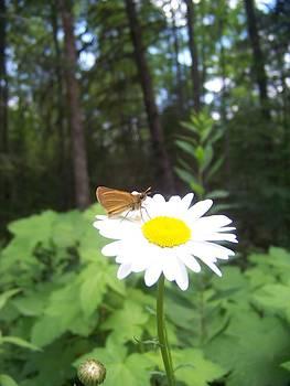 A Bug's Life by Ashley Howard