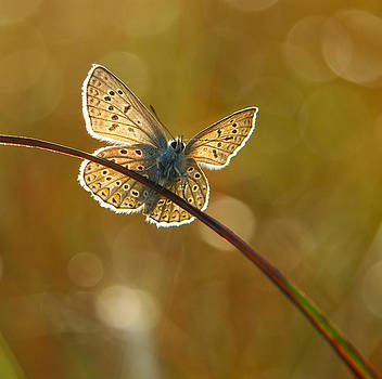 A Butterfly Also Loves To Just Be by Syssy Jaktman