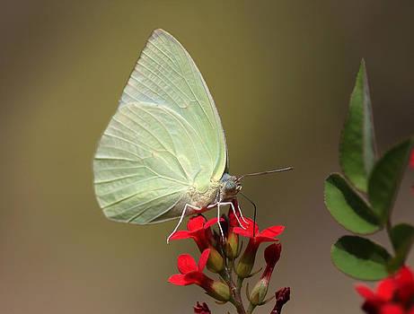A Butterfly Lights Beside Us by Sandeep Gangadharan