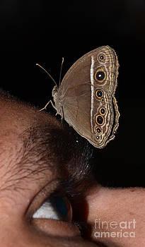 A Butterfly On My Eye by Jiss Joseph