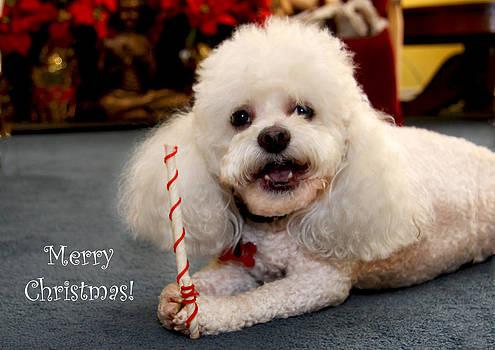 Diana Haronis - A Candycane for Puppy