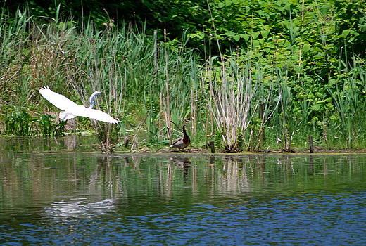A Crane in Flight by Michelle Cruz