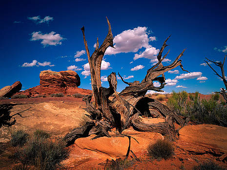 A Dead Branch in Canyonland National Park by Daniel Chui