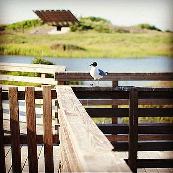 A Dock In Port A. #waiting #seagull by Victoria Haas
