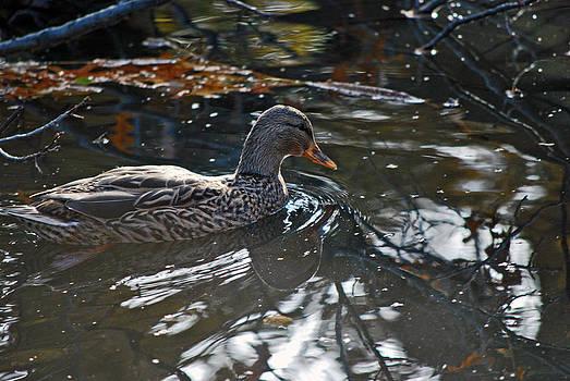 Michelle Cruz - A Duck to Water