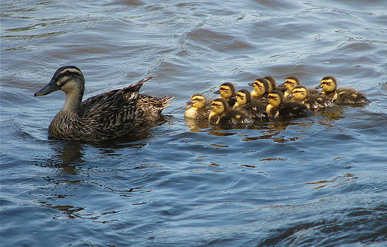 A Family Swim by Victoria Sheldon