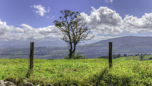 A fence and a tree 3552HDR by Sortarivs Arts