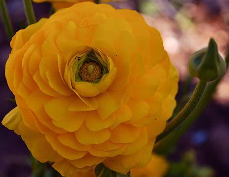 Michelle Cruz - A Floral Inspiration