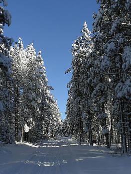 FeVa  Fotos - A Forest Path